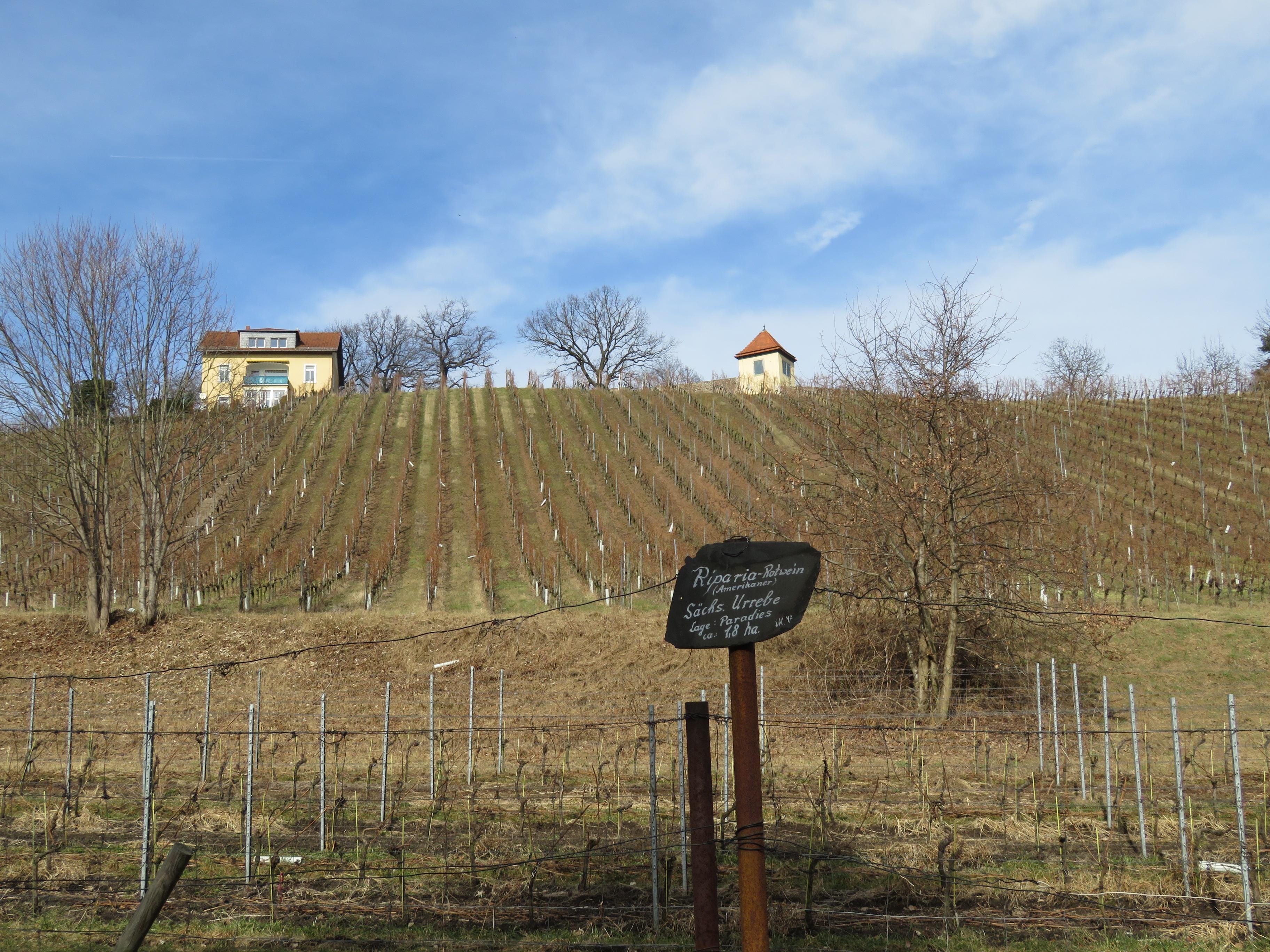 Weinwanderweg Radebeul